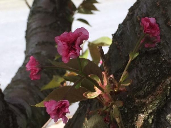 b pink closeup tree