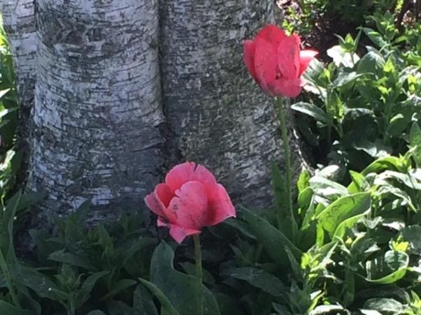 b pink flowers